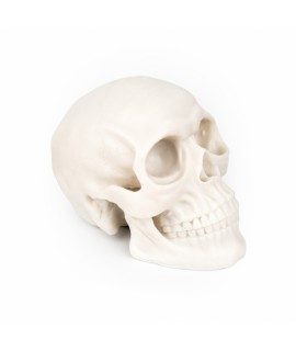 Silicone exercise skull